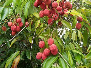 Fruits 35