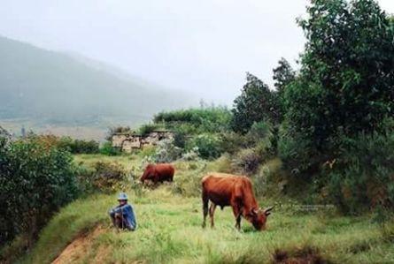 Malagasy ve ianao miandry omby ririnina